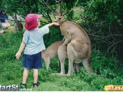 Kangury i dziecko