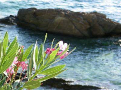 Kwiat Grecji