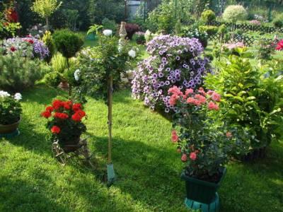 kwiaty na działce
