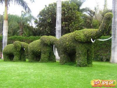 Były sobie słonie 3