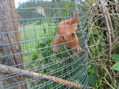 Park dzikich zwierząt w Kadzidłowie 8