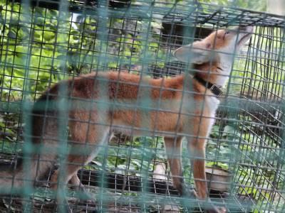 Park dzikich zwierząt w Kadzidłowie 11