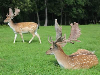 Park dzikich zwierząt w Kadzidłowie 14