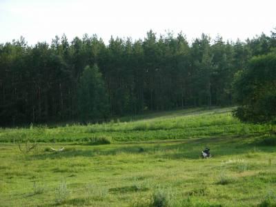Zdjęcia lasów, łąk, jeziorka... 3