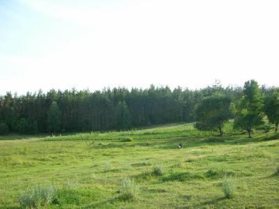 Zdjęcia lasów, łąk, jeziorka... 4