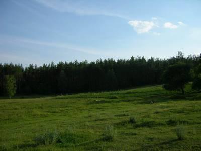 Zdjęcia lasów, łąk, jeziorka... 5
