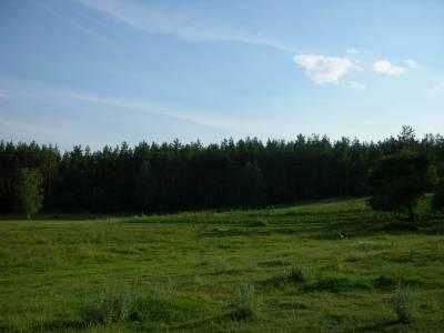 Zdjęcia lasów, łąk, jeziorka... 6