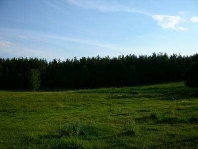 Zdjęcia lasów, łąk, jeziorka... 7