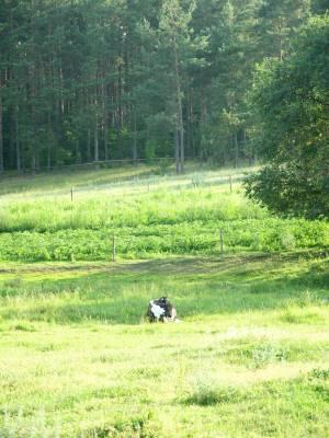 Zdjęcia lasów, łąk, jeziorka... 8