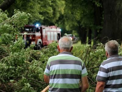 Powalone drzewo na drodze Dobre Miasto - Orneta