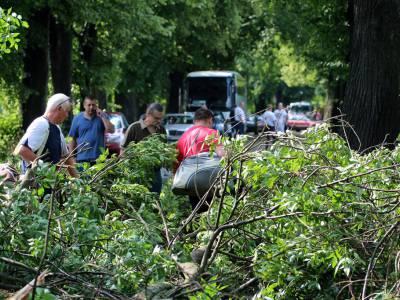 Powalone drzewo na drodze Dobre Miasto - Orneta 3
