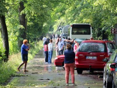 Powalone drzewo na drodze Dobre Miasto - Orneta 8