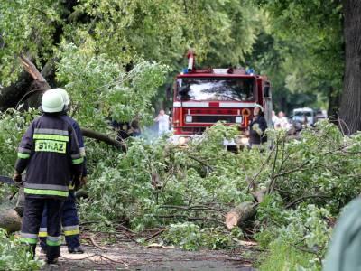Powalone drzewo na drodze Dobre Miasto - Orneta 11