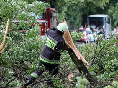 Powalone drzewo na drodze Dobre Miasto - Orneta 12