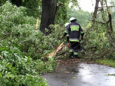 Powalone drzewo na drodze Dobre Miasto - Orneta 13