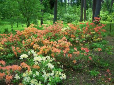 Arboretum w Kudypach cz.II 2