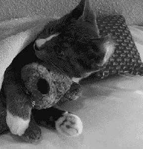 Słodki kociak Przytulak