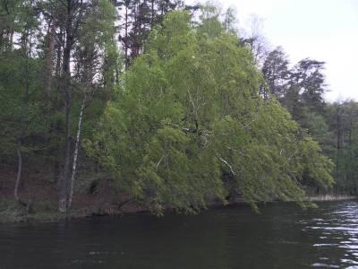 Pomosty na jeziorze Tyrkło 6