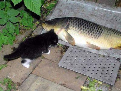 kotek z rybka