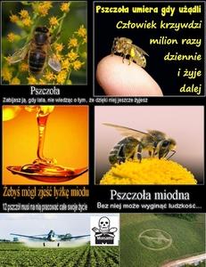 STOP GMO, STOP Chemtrails, STOP USA, STOP Monsanto Company, RATUJ pszczoły - RATUJ SIEBIE