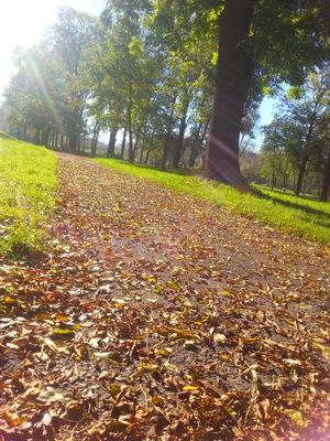 nasza polska piekna jesien