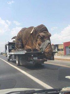 Dinozaur.