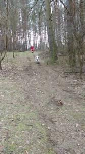 16.03.19 - cwiczenia z poszukiwań i ewakuacji w lesie 59