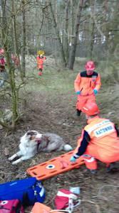 16.03.19 - cwiczenia z poszukiwań i ewakuacji w lesie 79