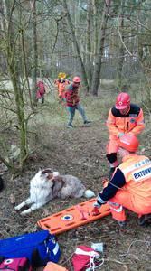 16.03.19 - cwiczenia z poszukiwań i ewakuacji w lesie 80