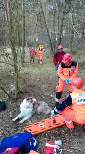 16.03.19 - cwiczenia z poszukiwań i ewakuacji w lesie 81