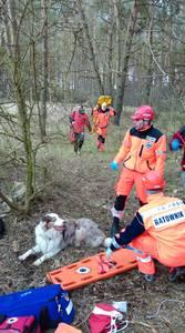 16.03.19 - cwiczenia z poszukiwań i ewakuacji w lesie 82