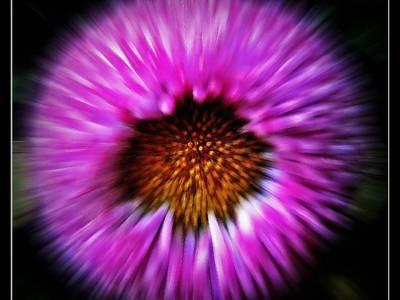 kwiatek. 1
