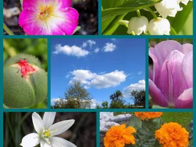 Kolaż - kwiaty  majowe