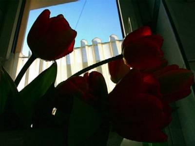 Domowe róże:)