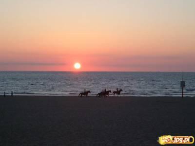 konie na plazy w sheveningen w holandii
