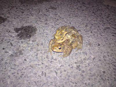 Żabki 5