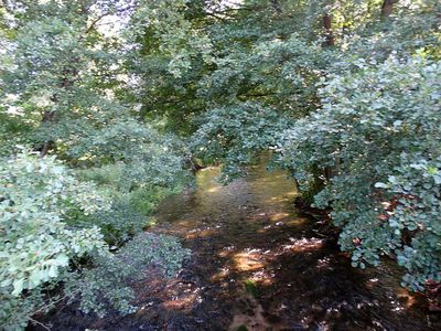 Rzeka Piława 11