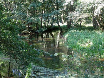 Rzeka Piława 16