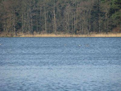 Jezioro Dąb 3