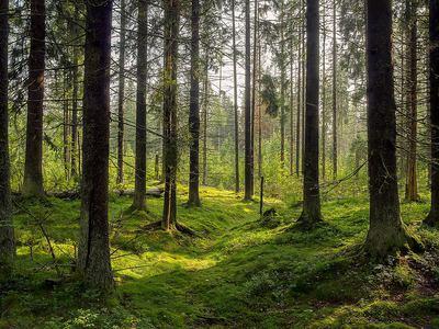 W lesie najlepiej