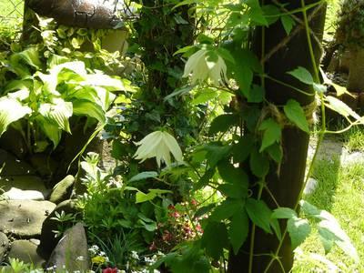 Mój ogrod 2