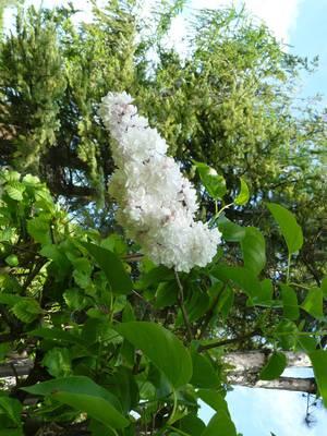 Mój ogrod 3
