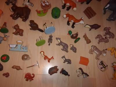 zwierżęta 13