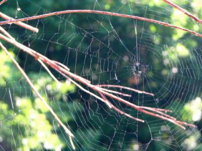 Sieć pająka.