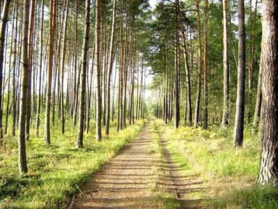 Taka tam prosta droga w lesie