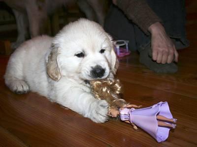 pies zabawa
