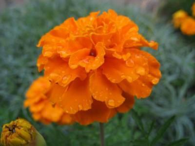 Kwiat po deszczu